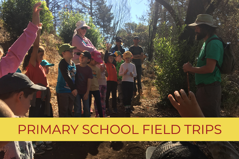 Primary School - Field Trips Funded by Give BIG!